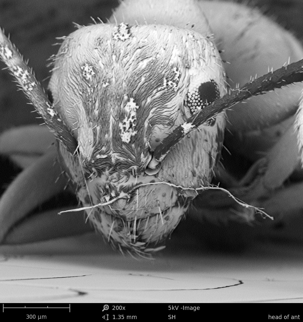 Insecten 130.000 keer vergroot
